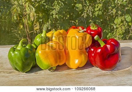 Green , yellow and red pepper.