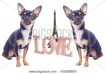 Dog With Love Letters In Paris