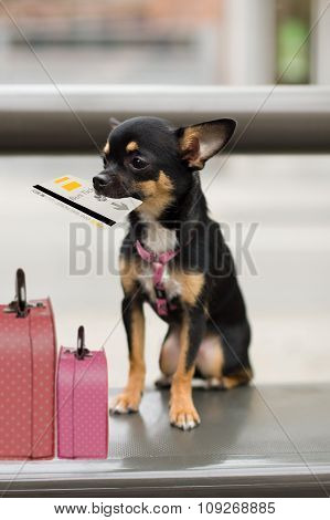 Dog With Luggage Waiting On The Bus For Departure
