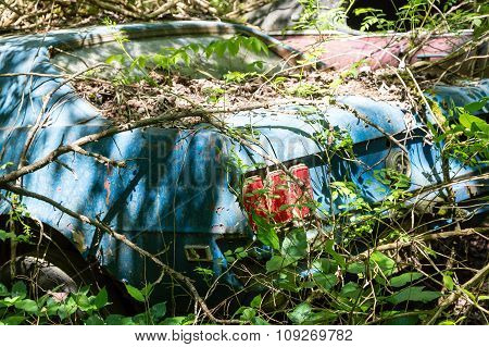 Blue Mustang In Weeds