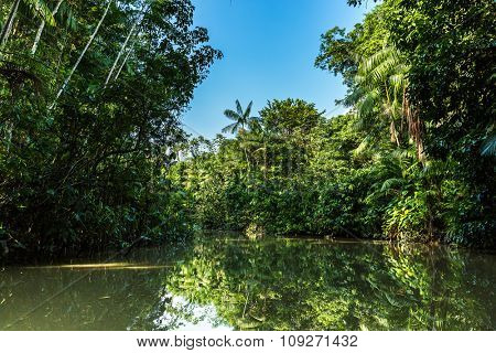 Wetlands in Belem do Para, Brazil