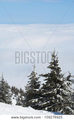 Snow mountain trees with white clouds under the mountain. Winter concept