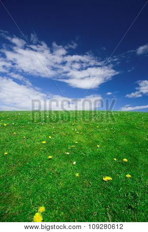 Field of yellow dandelions on background of the sky