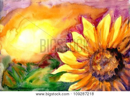 Watercolor painting. Sunflower field in time sunset