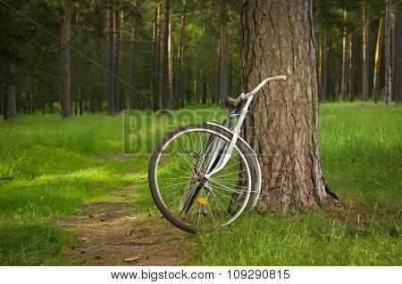 Vintage Bicycle In The Forest