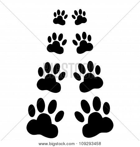 Dog Paws Following Illustration On A White Background