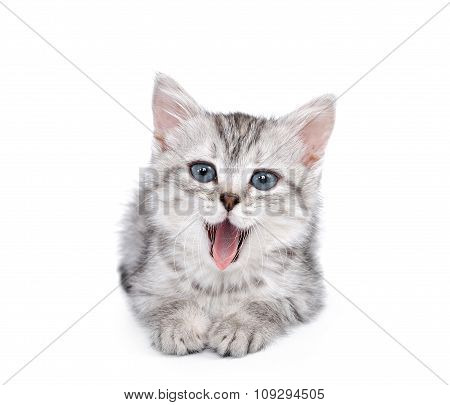 Gray kitten isolated on white