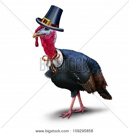 Turkey Pilgrim Character