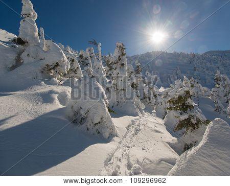 Sunlit Winter Nature Scene