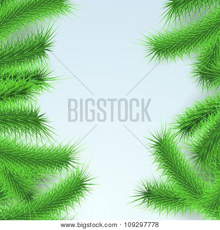 Green Fresh Firtree Branches Layout