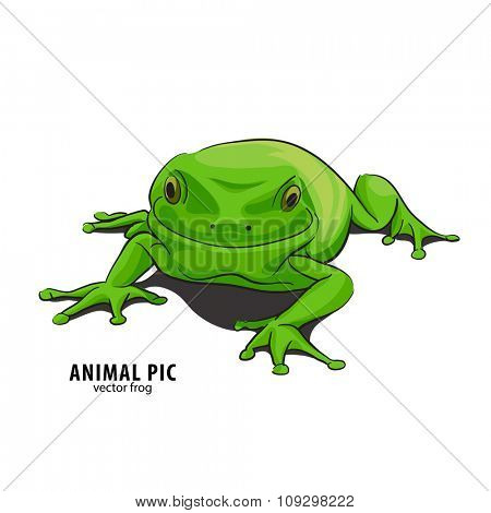 Illutration of frog on white background