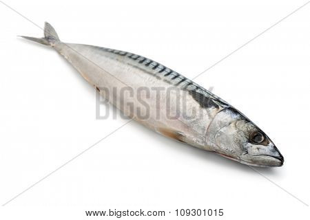 Fresh raw mackerel isolated on white