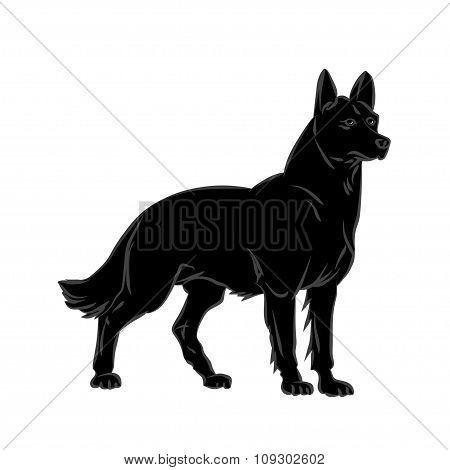 Vector image of an dog