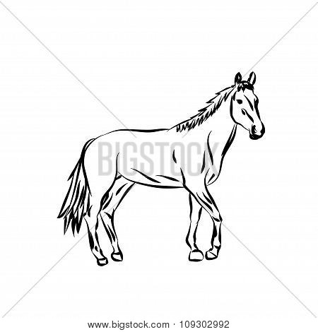 Vector silhouette. Cartoon horse.