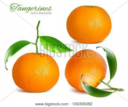 Tangerines. vector illustration.