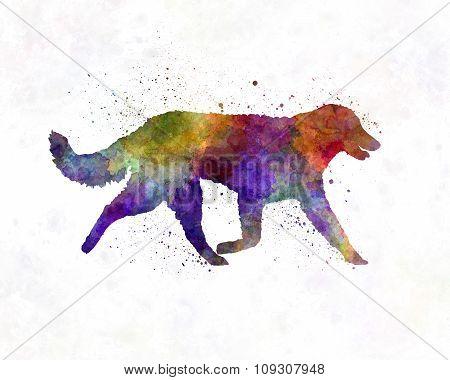 Kuvasz In Watercolor