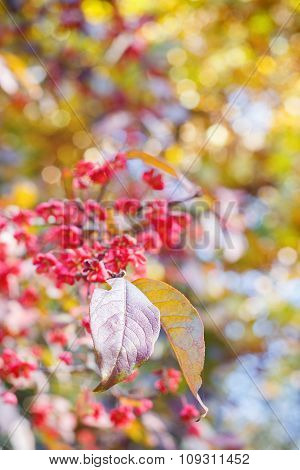 Spindle Tree Leaf On Natural Autumnal Blurred Background