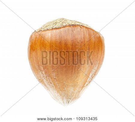 High Quality Macro Picture Of Hazelnut, Isolated On White
