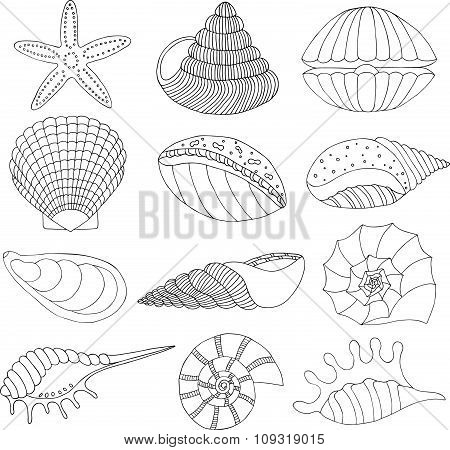 Wonderful vector set of seashells and starfish.