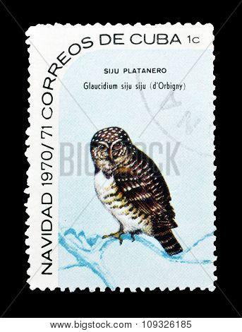 Cuba 1970 The Cuban pygmy owl