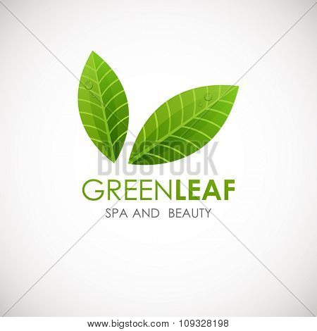 Green leaf vector logo design template.