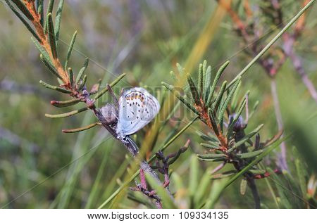 Moth On A Branch Of Rosemary