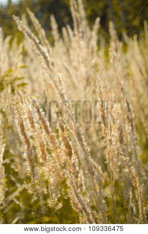 dry grass, autumn
