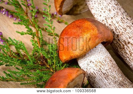 orange-cap boletus background