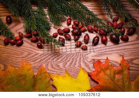 Natural background. Spruce and rose hips on a wooden table. Autumn background
