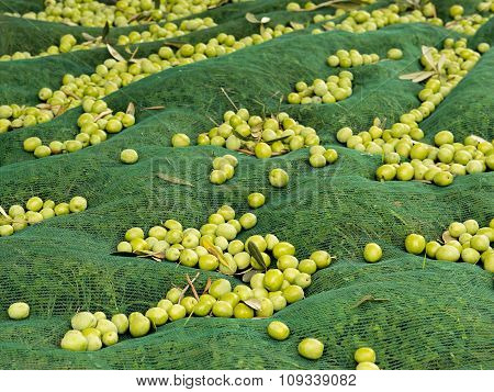 Olives On The Net