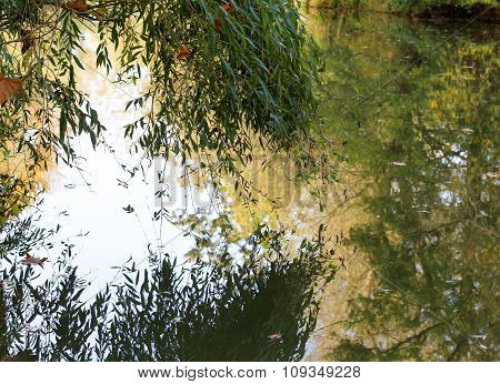 Trees Reflected In River On Autumn Sunny Day