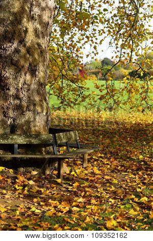 Wooden Bench Around A Big Tree On Sunny Day In Park