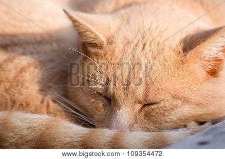yellow cats