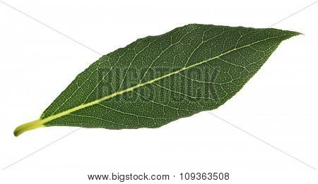 Fresh bay leaf, isolated on white