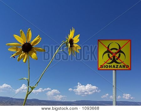 Safe_Environment