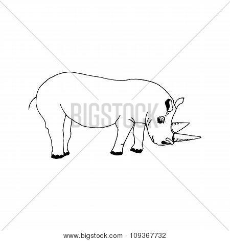 hand draw a rhino
