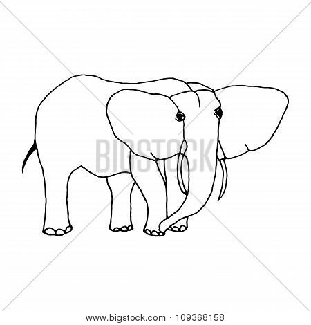 hand draw a sketch in the style of an elephant
