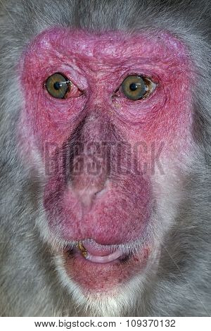 Portrait of monkey with a surprise expression