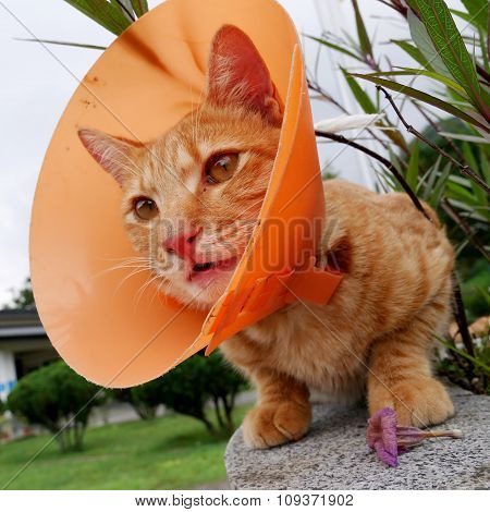 Cute cat wearing orange plastic cone collar