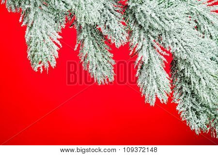 branch of Christmas tree on red background