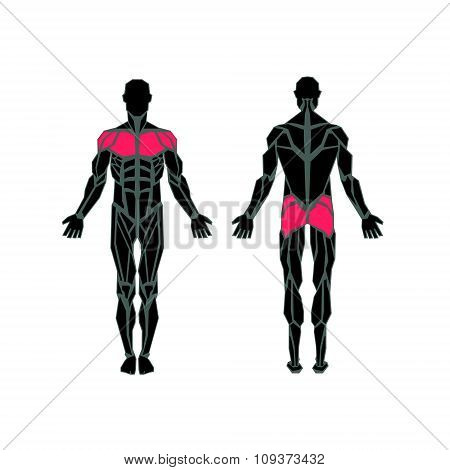 Polygonal Anatomy Of Male Muscular System, Exercise And Muscle Guide. Human Muscular Vector Art, Fro