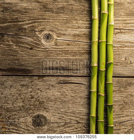 bamboo grove on the wooden baord background