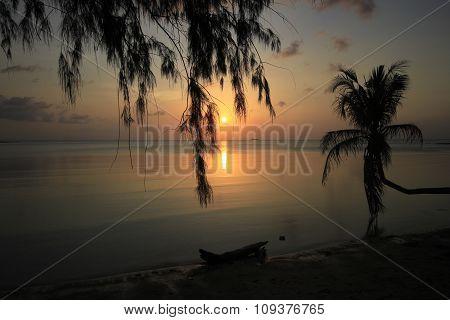 Phangan Sunset Coconut Tree