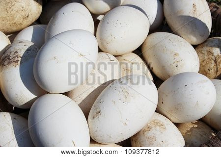 heap of goose eggs