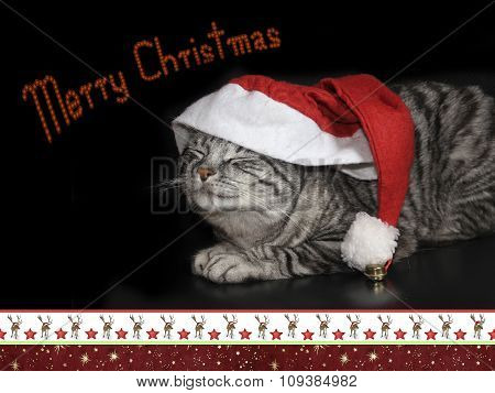 Tabby Cat With Saint Nicholas Cap, Christmassy Border, Card Design