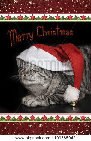 Cute Tabby Cat With Saint Nicholas Cap, Christmassy Border, Card Design