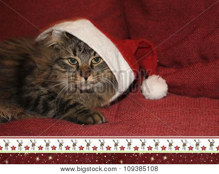 Siberian Cat With Saint Nicholas Cap, Christmassy Border, Card Design