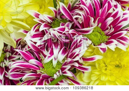 Bouquet Of Beautiful Colorful Chrysanthemums, Close-up