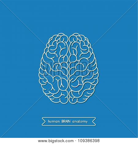 Human Brain 3