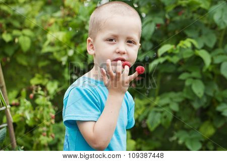 Cute Little Boy Eating Raspberries From  His Fingers.
